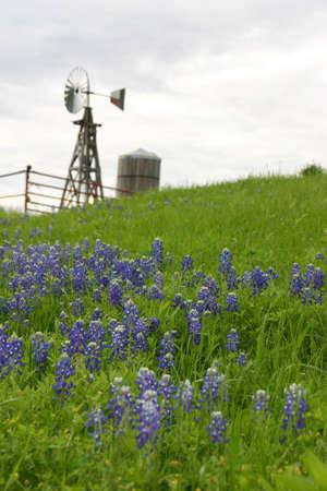 풍차와 물 탱크는 잔디와 블루 보넷 꽃의 언덕에 앉아
