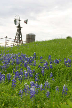 A windmill and water tank sit on a hillside of grass and bluebonnet flowers photo