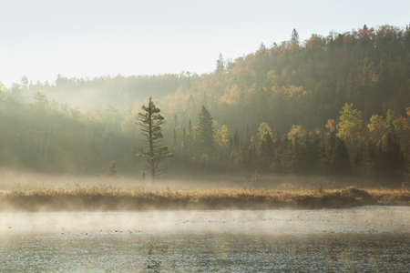 A lone pine stands on a misty river bank surrounded by hills with autumn color in early morning light Stock Photo