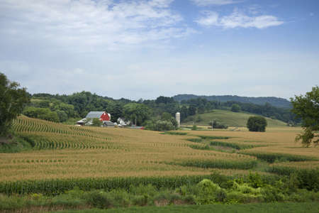 Lovely Wisconsin farm with red barn surrounded by hills and a field of mature corn