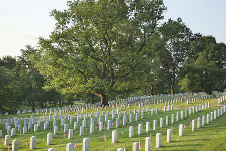 military cemetery: Gravestones with American flags below a beautiful tree in Arlington National Cemetery on Memorial Day