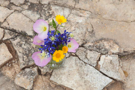 bluebonnet: A bouquet of Texas wildflowers from the Texas Hill Country in a mason jar shot from overhead on stone ground. Evening primroses, bluebonnets and yellow daisies.