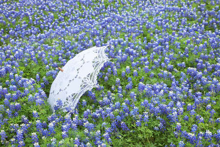 A white lace parasol sits in a field of Texas bluebonnets during spring