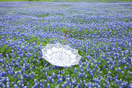 A white lace parasol sits upside down in a field of Texas bluebonnets 版權商用圖片