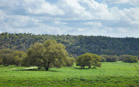 A ranch pasture with trees in the Texas Hill Country on a sunny afternoon 免版税图像