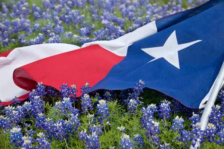 Low Angle View von einem Texas-Flaggen Verlegung unter bonnet Blumen auf einem hellen Frühlingstag in der Texas Hill Country Standard-Bild - 39903659