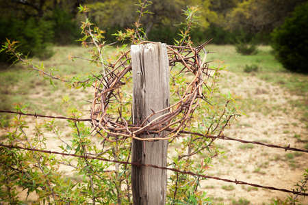 trees with thorns: Crown of thorns on a Texas Hill Country fence post with a holly bush behind Stock Photo