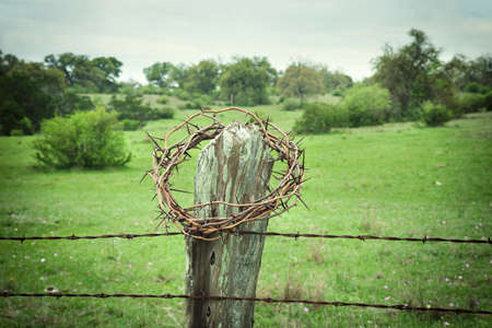 barbed wire fence: Selective focus crown of thorns on a Texas Hill Country fence post with a field and trees in the background