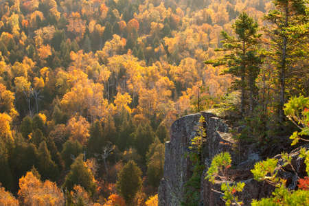 minnesota woods: Backlit cliff with pines above aspen trees in fall color on Oberg Mountain in northern Minnesota Stock Photo