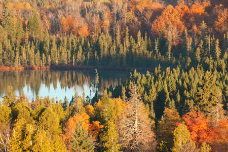 autumn colour: Small lake among pines,aspens and maples with fall color in northern Minnesota