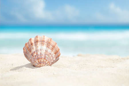 Low angle view of a scallop shell in the sand beach of the Caribbean sea Stok Fotoğraf