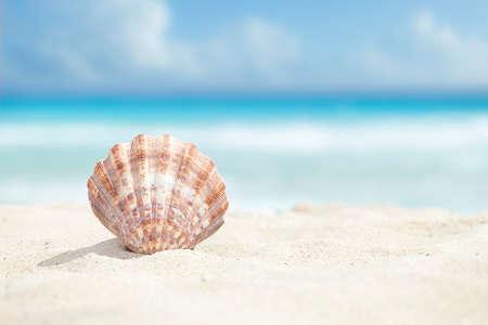 arena: ángulo de visión baja de una concha de vieira en la playa de arena del mar Caribe