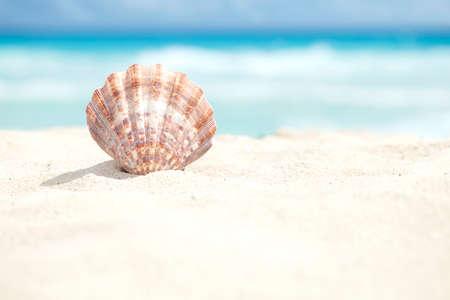 Faible angle de vue d'une coquille Saint-Jacques sur la plage de sable de la mer des Caraïbes