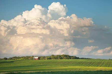 Red barn and soybean fields below dramatic cloudscape in evening sun 版權商用圖片