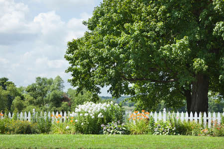 A cute white picket fence with flowers in front of a big tree stock a cute white picket fence with flowers in front of a big tree stock photo mightylinksfo