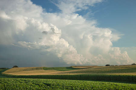 Midwest corn and soybean fields below dramatic clouds 版權商用圖片