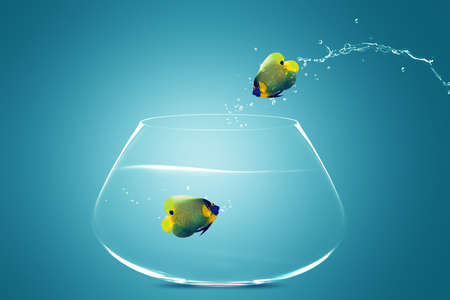 Angelfish jumbing to other bowl, Good Concept for new love, new Opprtunity and challenge concept. Stock Photo - 10892003