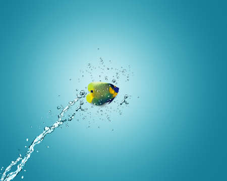 Angelfish jumbing to other bowl, good concept for Recklessness and challenge concept. Stock Photo - 10992131