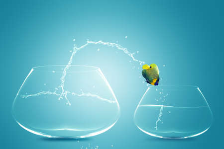 worst: Anglefish jumping to small bowl, Good Concept for bad choice, bad Opprtunity, Failure and Stupidity concept.
