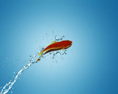Golden fish jumping out of water, Good Concept for bad luck, unlucky, risks concept. photo