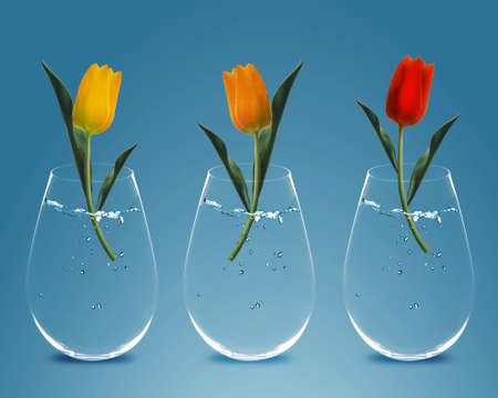 Three colorful Tulips in three transparent vases