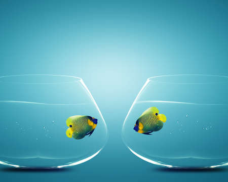 waiting convict: Two Angelfish in Two bowls, Concept for missing, Divorce and Incapacity Stock Photo
