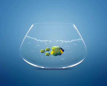 follow the leader: grote maanvissen kopgroep van maanvissen. Stockfoto