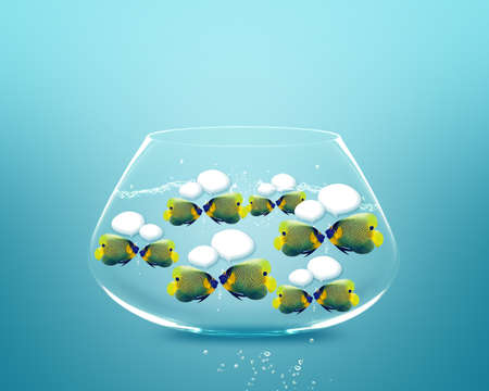 Happy school of angel fish angelfish faces as social network with speech bubbles. photo