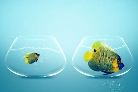 Large and small angelfish,conceptual image for diet, fat. Zdjęcie Seryjne