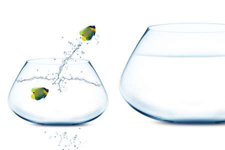 Anglefish in small fishbowl watching goldfish jump into large fishbowl