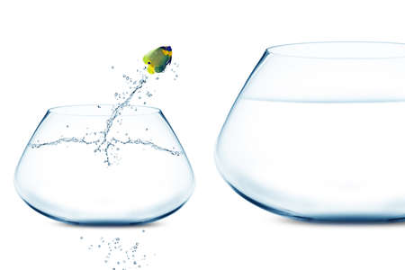 confined: Anglefish jumping into bigger fishbowl. Stock Photo