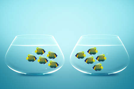 angelfish: Two groups of angelfish in fishbowls looking to each other.