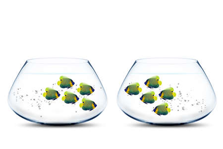 Two groups of angelfish in fishbowls looking to each other. Stock Photo - 11663808