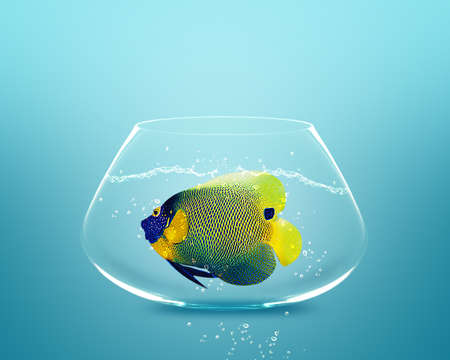 angelfish in small bowl and looking for something better. Stock Photo - 11798646