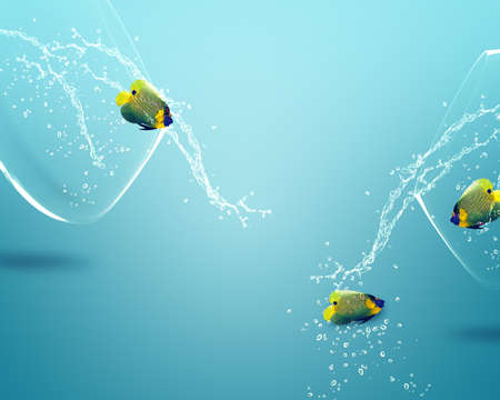 Two angelfish jumping out of  fishbowl to new one, one failed one win. photo