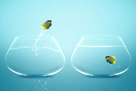 business relationship: Angelfish jumbing to other bowl, Good Concept for new love, new Opprtunity and challenge concept.
