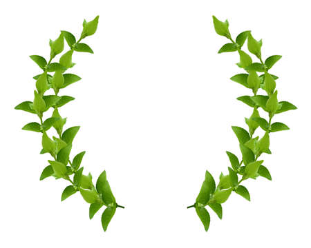 Laurel Wreath made by fresh Green leaves  isolated on white, photo