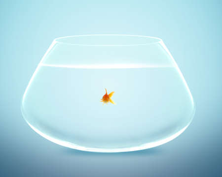 goldfish in Big bowl, Good Concept for new life, Big Opprtunity, Ambition and challenge concept. photo