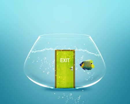 angelfish in small bowl with exit door. photo