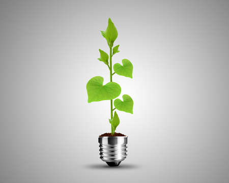 light bulb made from green Leaves , light bulb conceptual Image. photo
