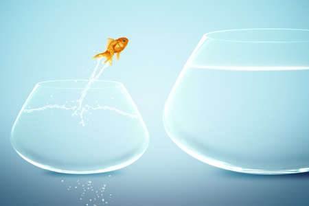 goldfish in small fishbowl watching goldfish jump into large fishbowl