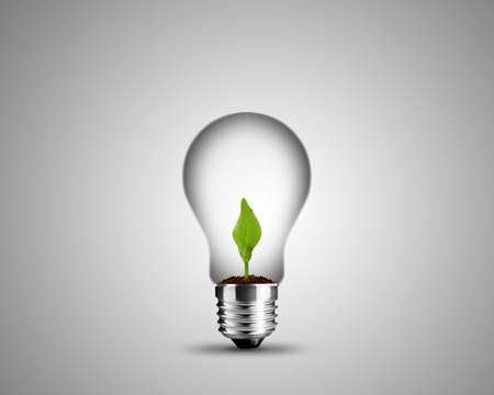 light bulb made from and small plant inside, light bulb conceptual Image. photo