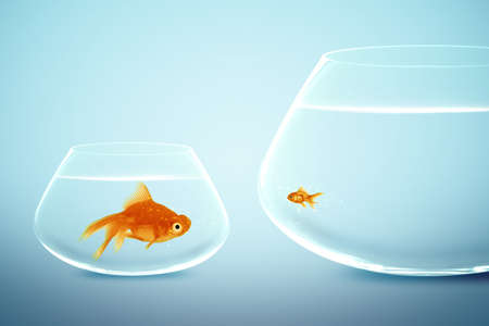 comparisons: Big and small goldfish,conceptual image for diet, fat.