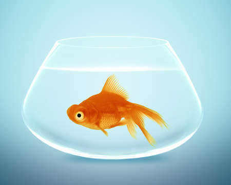 goldfish in small bowl and looking for something better. Stock Photo - 13171222