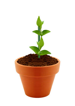 Young plant in clay pot isolated on white background.  photo
