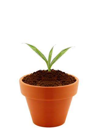 olla barro: Joven planta en la olla de barro aisladas sobre fondo blanco. Foto de archivo