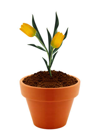 flower in clay pot isolated on white background.  photo