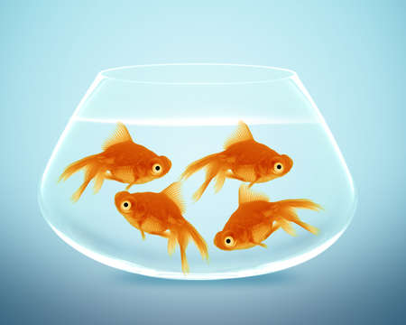 goldfish in small bowl and looking for something better. Stock Photo - 13252504