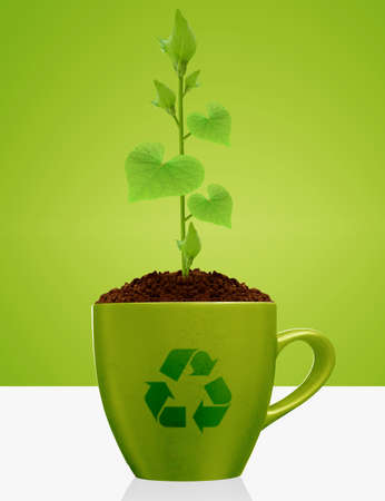 Young plant with heart shape leaves growing in green mug,with recycle sign. photo