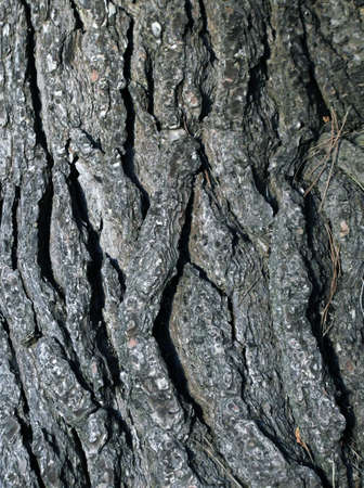 closeup of cracked tree trunk photo